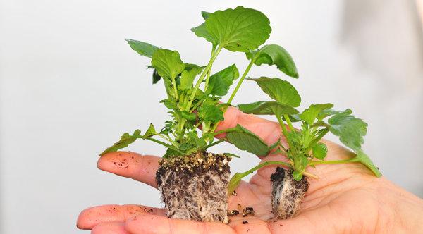 Minimottes ou jardimottes
