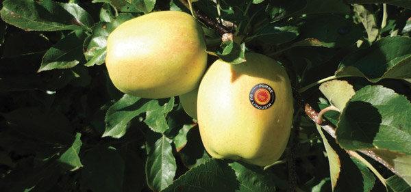 Une pomme de terroir français