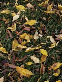 L'automne a débuté le 22 septembre