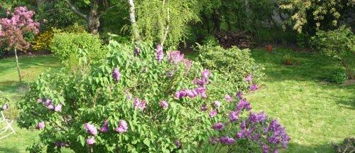 Fleurs & Arbustes