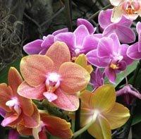 La serre tropicale aux orchidées