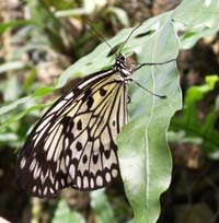 La serre aux papillons exotiques