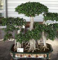 Le pavillon des bonsaïs et le jardin anglais