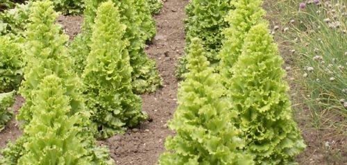 Matériels et conditions nécessaires pour conserver les graines