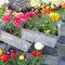 Forum La brocante au jardin