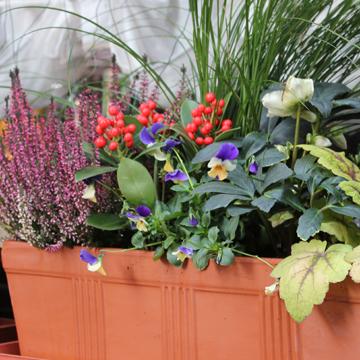 Une temp te pour finir l 39 ann e newsletter jardin n 83 for Jardiniere balcon hiver